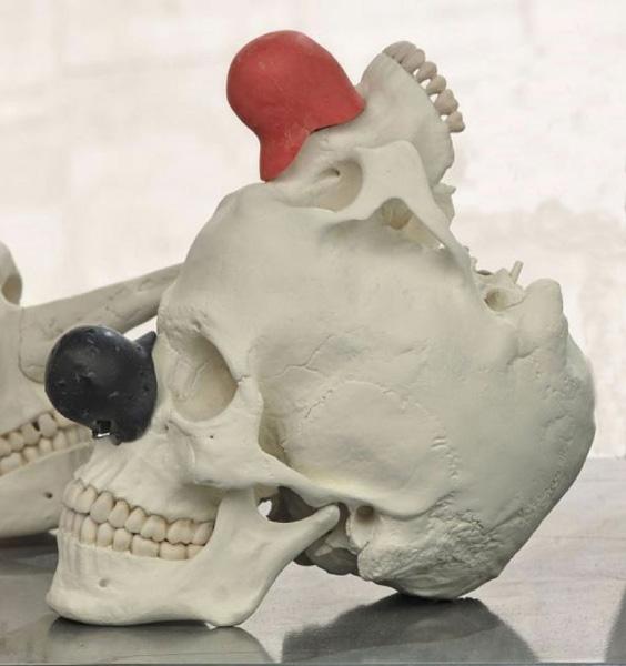 Bene Bergado - Cráneo de Homo Ridensis. 2016. Escultura / Poliuretano pintado. 32 x 28 x 18 cm. Ed. 1 + 1AP